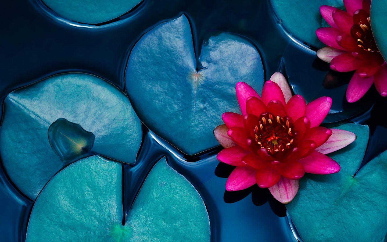 Shutterstock 1166657182 Min