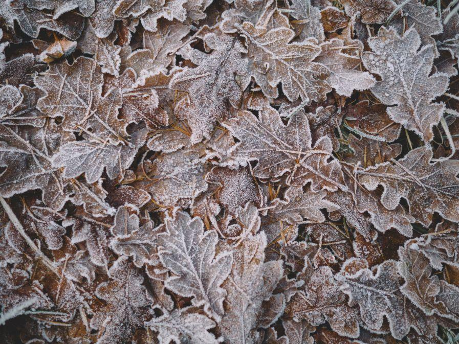 Winter leaves 1