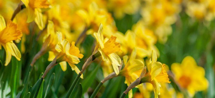 Spring in the Dales